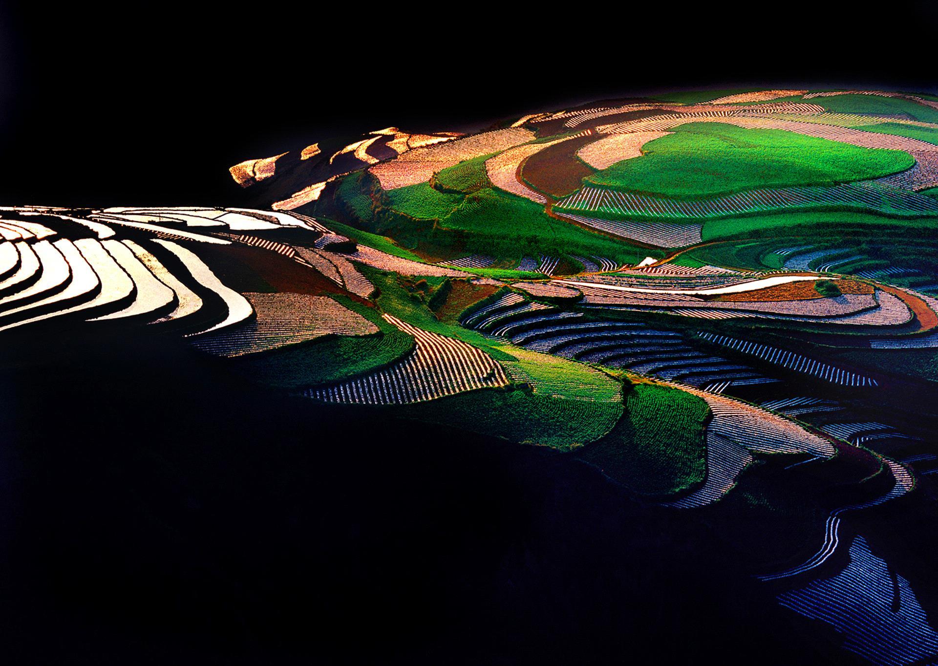 RPS Ribbons - Tong Hu (China)  BEAUTIFUL FIEID