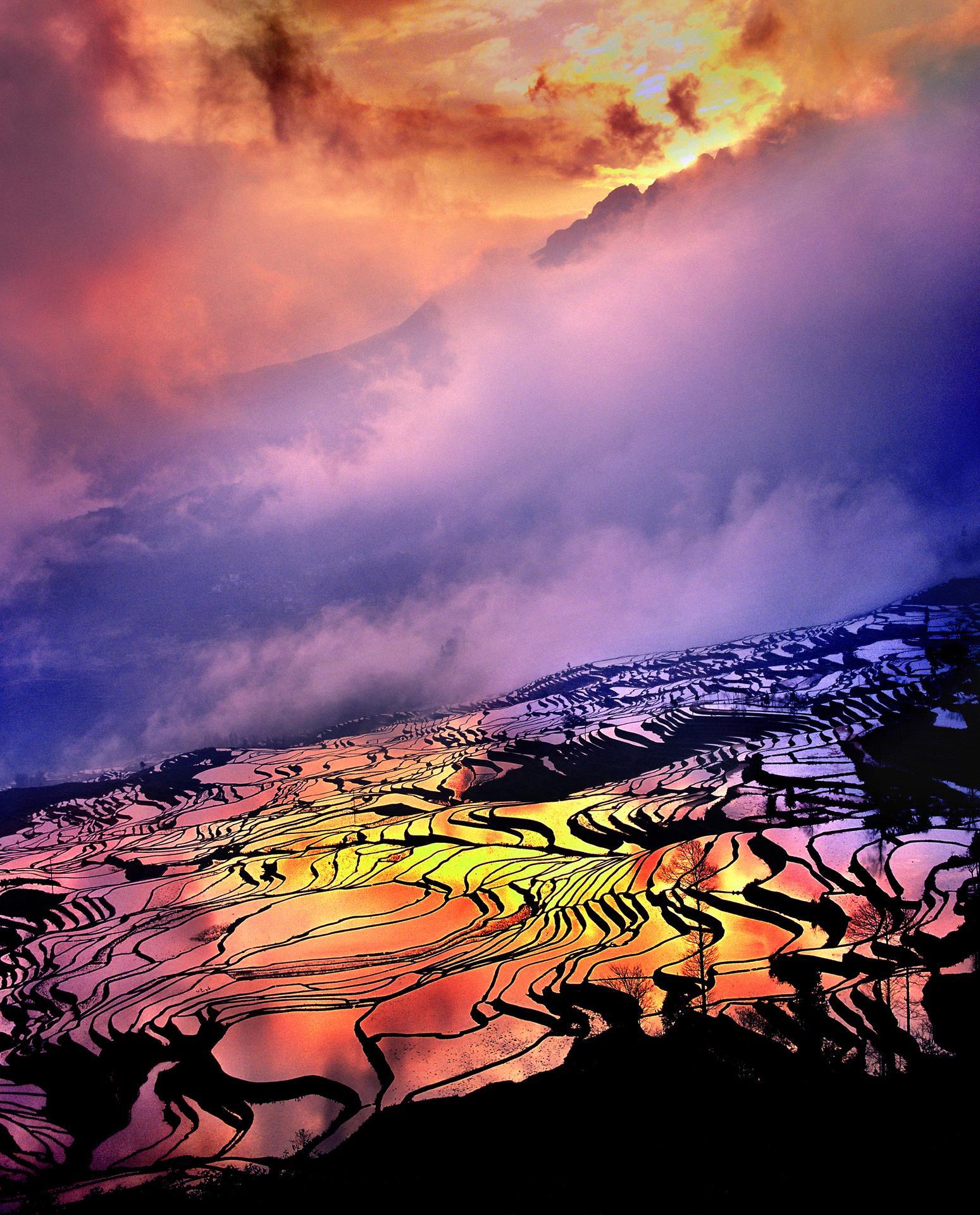 DIPA Merit Award - Tong Hu (China)  Dream Of Fields