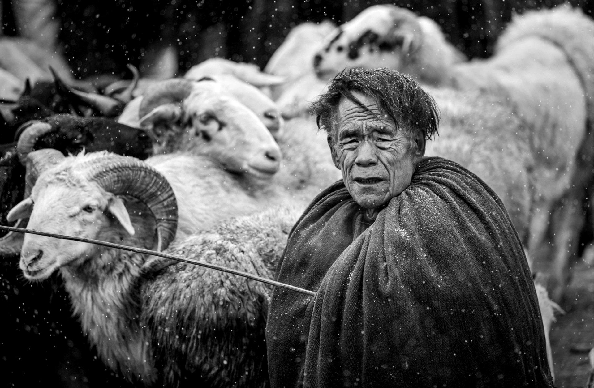 DIPA Merit Award - Weidong Zhong (China)  Sell Sheep