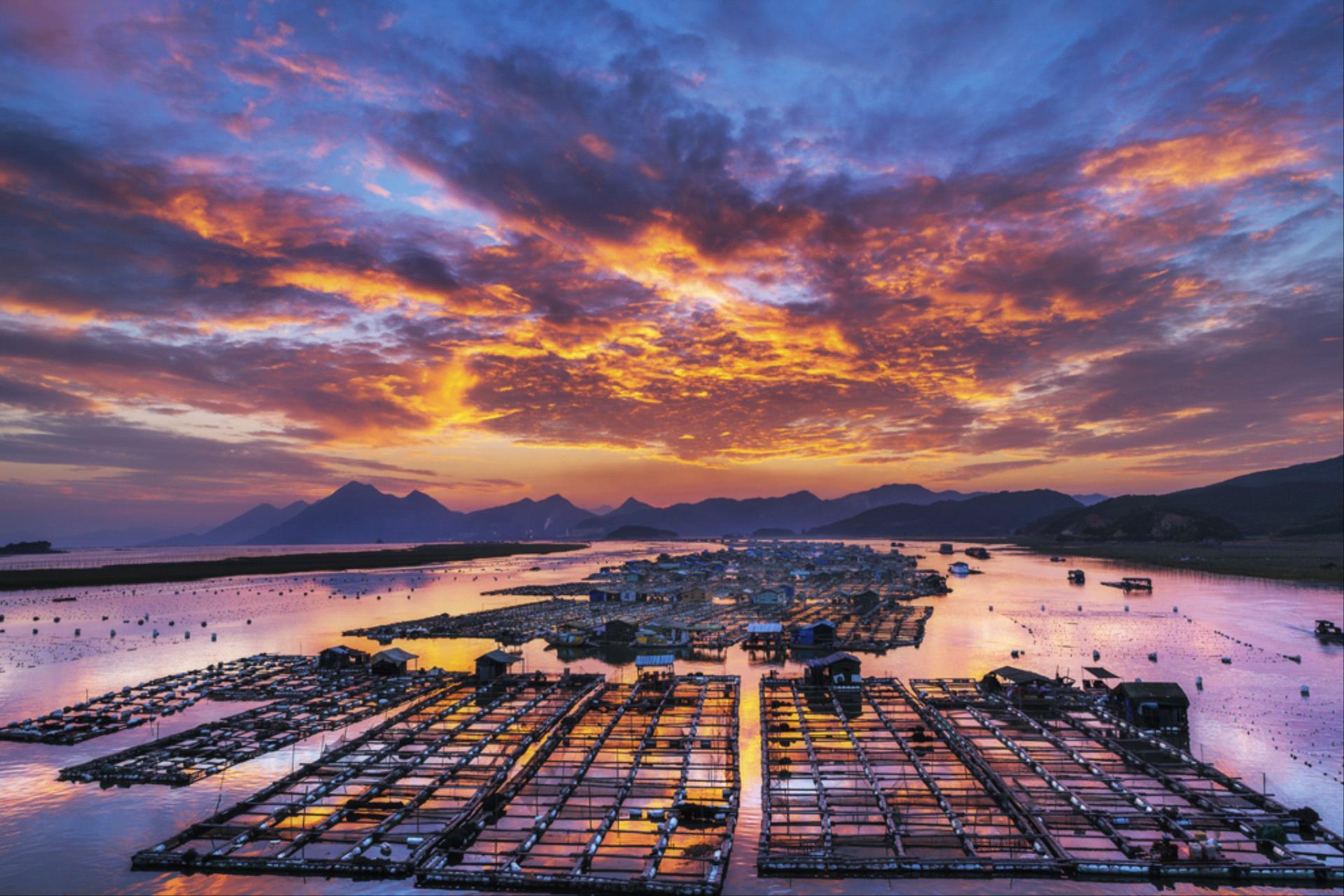 DIPA Merit Award - Yajun Huang (China)  Marine Aquaculture