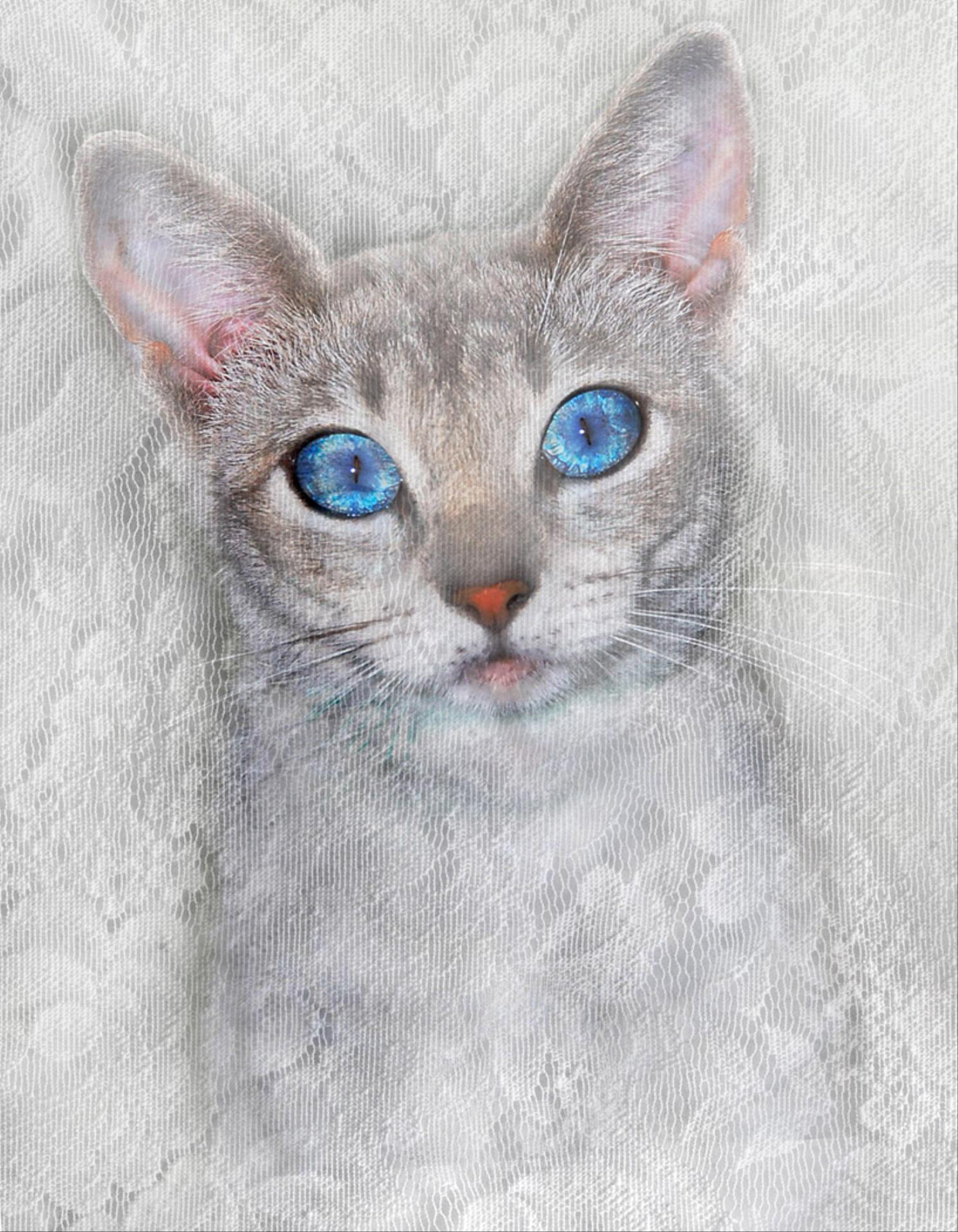 DIPA Merit Award - Trudy Runyan (USA)  Kitty Blue Eyes