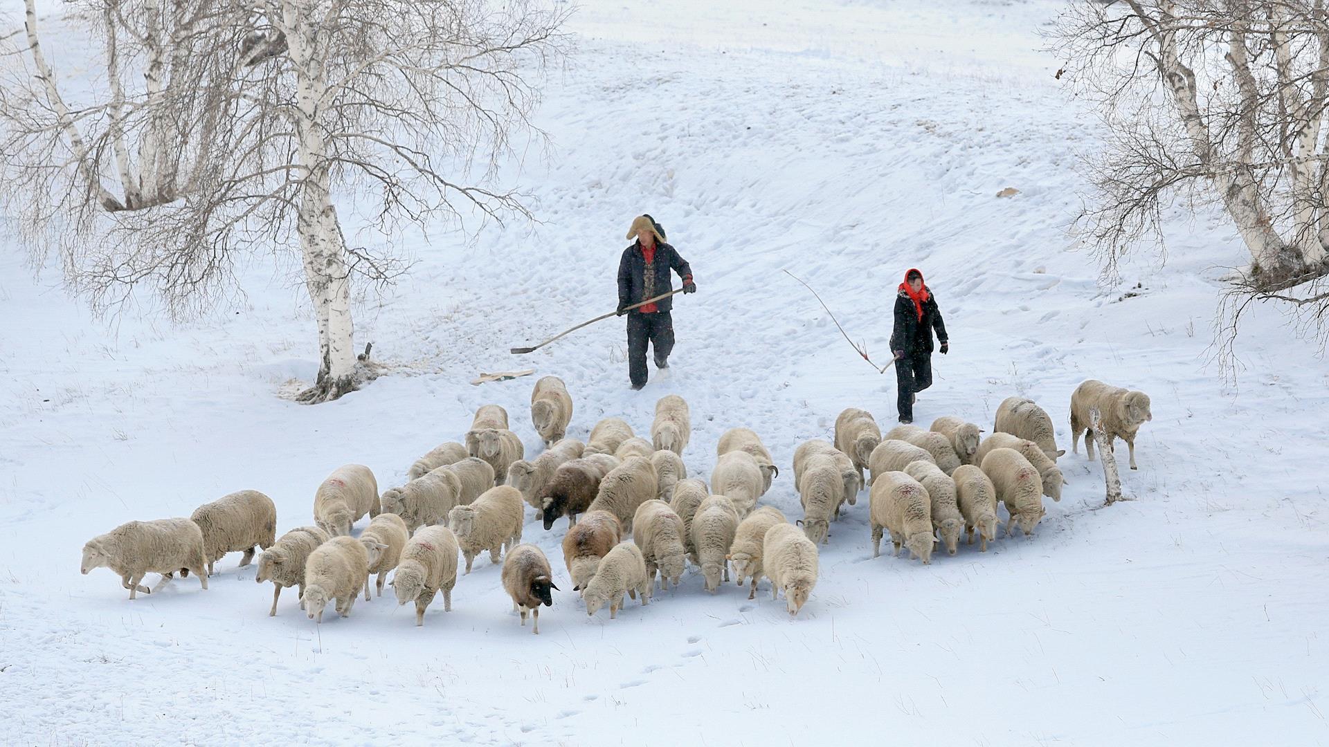 DIPA Merit Award - Kai Zheng (China)  Shepherd Song