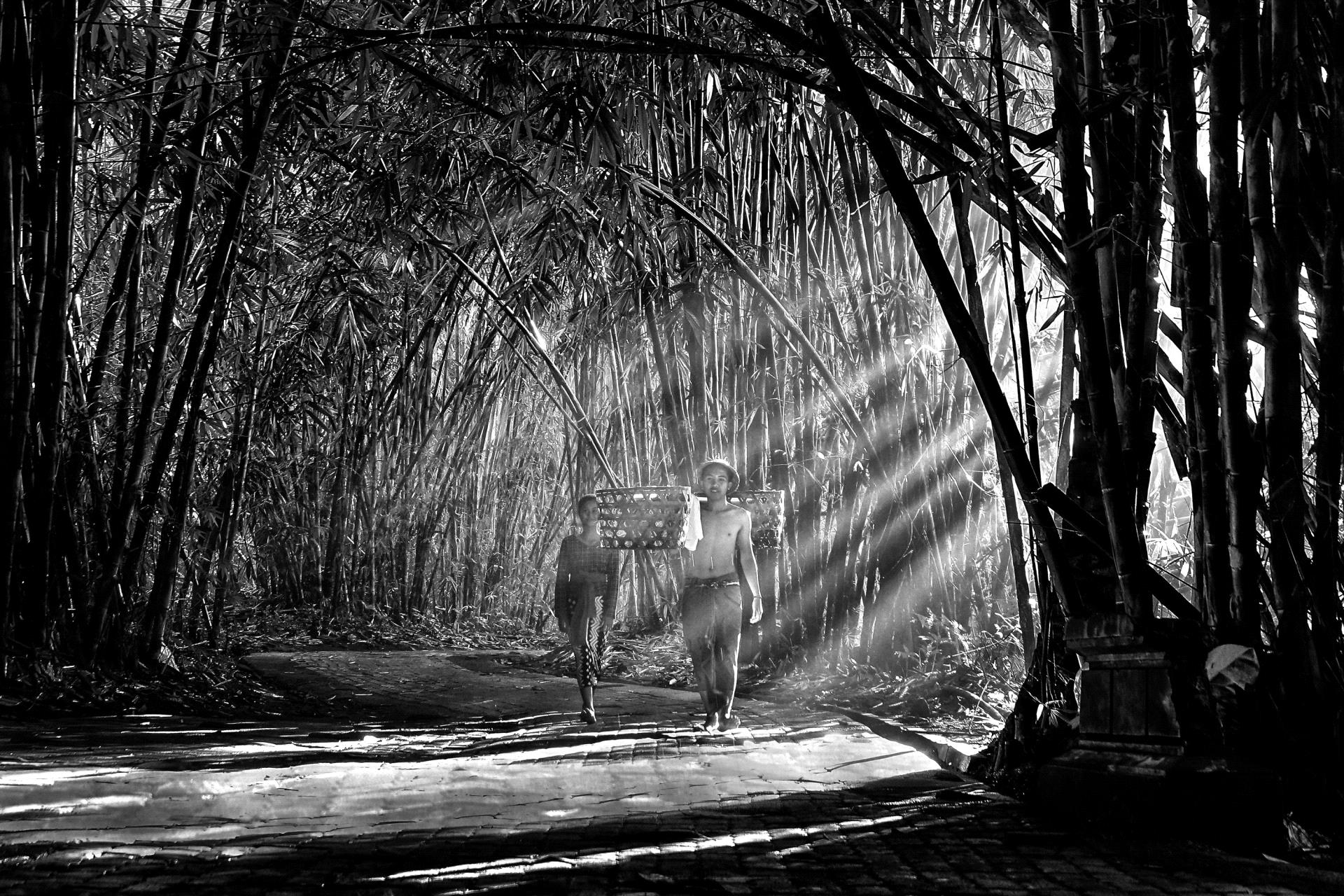 DIPA Merit Award - Zhong-He Xu (China)  Farmer In Bamboo Forest