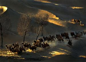 DIPC Silver Medal - Daming Liang (China)  Desert Camels Shadow