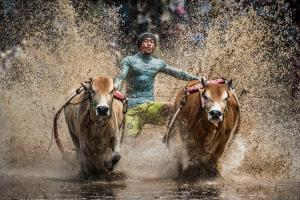 DIPC Merit Award e-certificate - Yiliang Yang (China)  Running Of The Bulls 1
