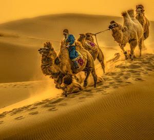 DIPC Merit Award e-certificate - Shiyang Dong (China) <br /> Desert Visitors