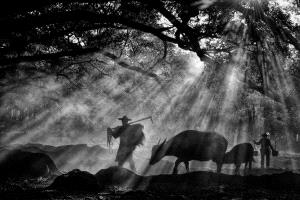 DIPC Merit Award e-certificate - Lee Eng Tan (Singapore)  Yang Village Cowherd Bw