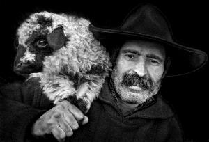 DIPC Merit Award e-certificate - Istvan Kerekes (Hungary) <br /> The Lamb