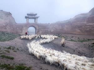 DIPC Merit Award e-certificate - Jun Ye (China)  Sheep