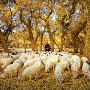DIPC Merit Award e-certificate - Weimeng Shi (China)  Golden Autumn And Shepherd Map