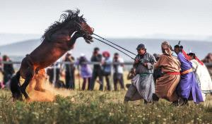 APAS Honor Mention e-certificate - Weidong Zhong (China)  The Horses