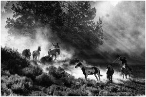 DIPC Merit Award e-certificate - Thomas Lang (USA)  Chasing At Dawn
