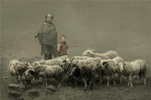PSA Gold Medal - Ruiyuan Chen (China) <br /> Shepherd
